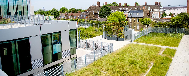 Vorbepflanzte Dach-Begrünung mit COMPLETA Pflanzschalen